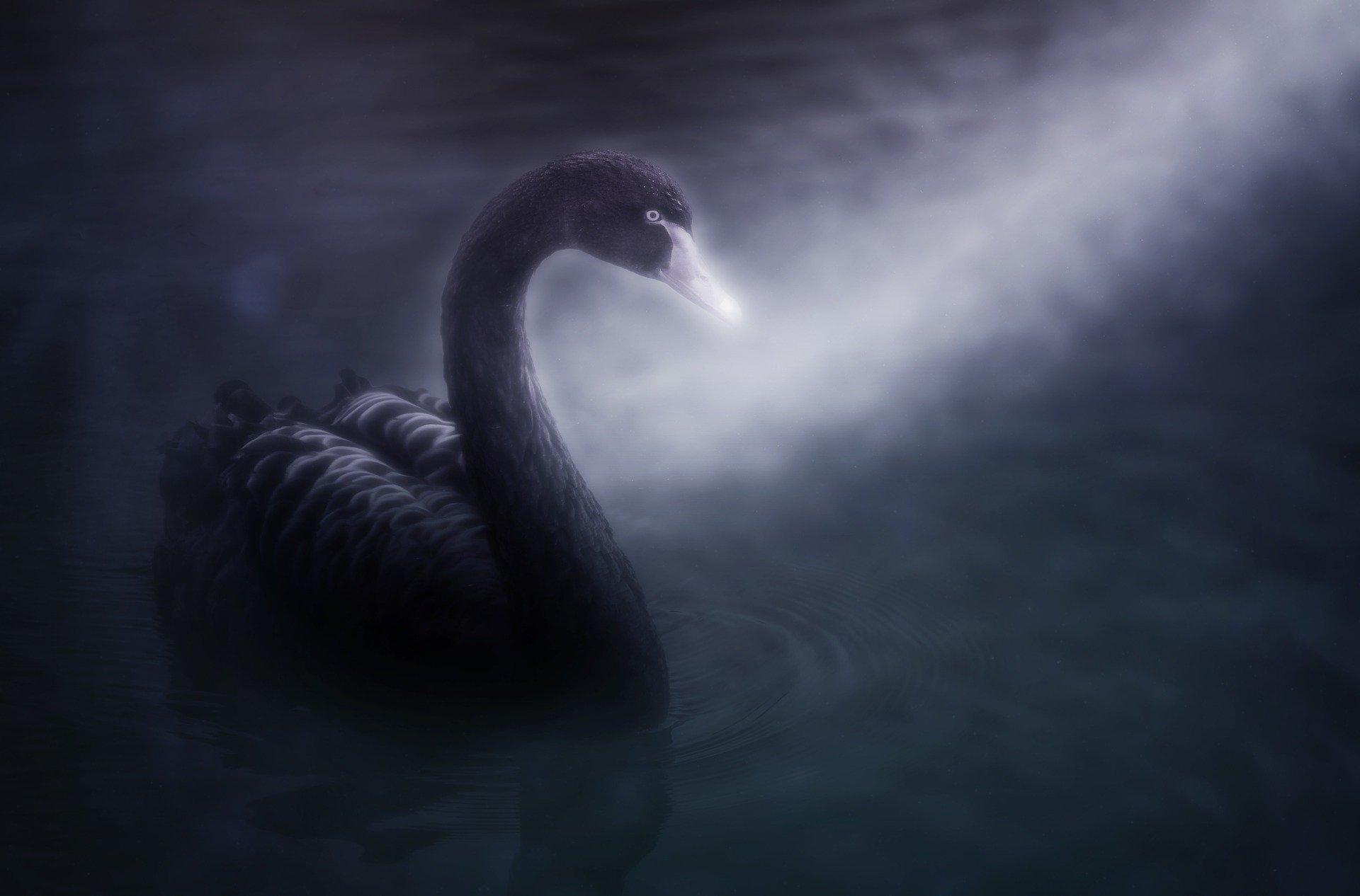 swan-4107442_1920
